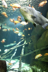 Sea Life: Mall Of America